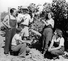 vine pruning